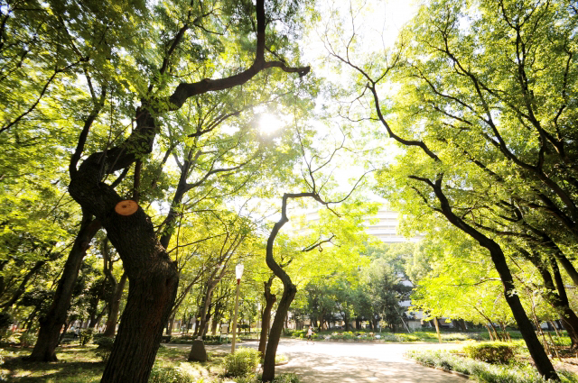 木漏れ日の公園