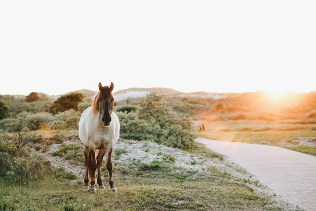 相手選び30代恋愛引き寄せ術白馬の王子様