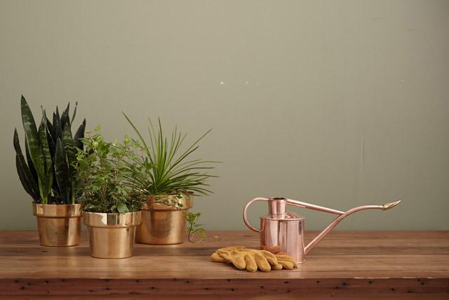 2020年令和2年寝室風水観葉植物