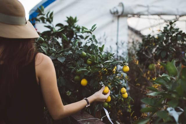 2020年令和2年パワースポット果樹園フルーツ果物