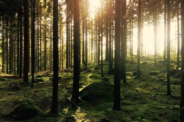 2020年令和2年パワースポット森林