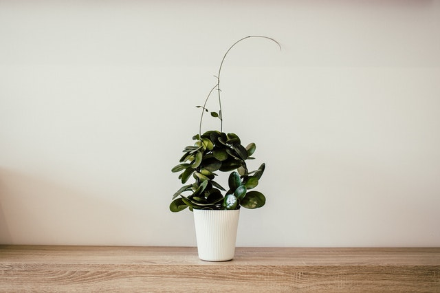 2020年令和2年リビング風水テレビの横に観葉植物
