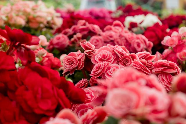恋愛運・結婚運爆アゲ最強風水寝室枕元にバラ薔薇