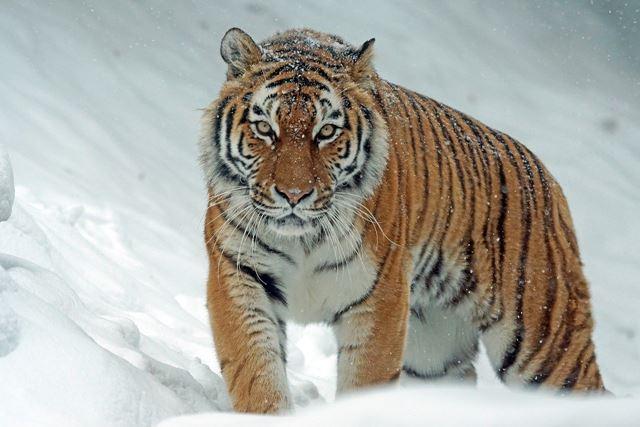 残念イケメン男性虎の威を借る狐系