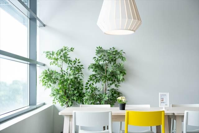 簡単に仕事運気アップを狙うなら東の方位に観葉植物を置く