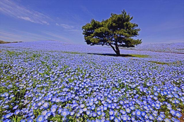 茨城県出身者が純朴な魅力に溢れる理由